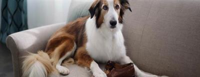 Воспитание собаки в домашних условиях