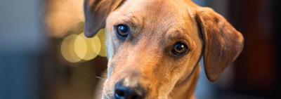 Можно ли кормить собаку домашней едой и сухим кормом и как их сочетать?