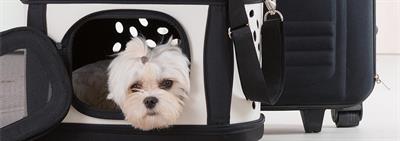 Перевозка собак в автомобиле и общественном транспорте