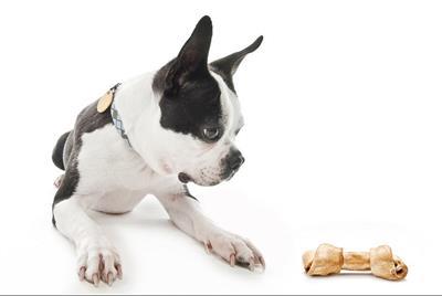 В каком возрасте и как перевести щенка на сухой корм?