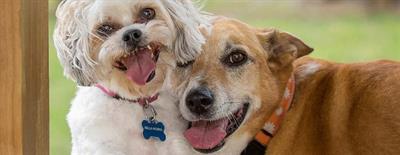 Во время прогулки собака бросается на других собак, что можно с этим сделать?