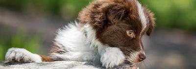 Как выбрать щенка в питомнике?