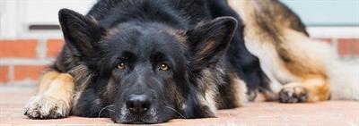 Что делать, если собака боится всего: детей, громких звуков, других собак и т.д.?