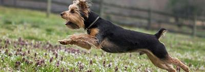 Чем полезны витамины для собак? (часть 1)