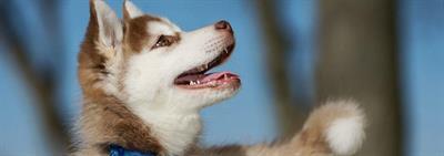 Уход за щенком: 10 золотых правил для хозяина