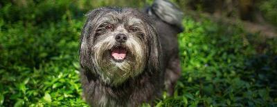 Можно ли давать собаке сладкое?