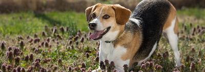 Какая порода собак хорошо ладит с детьми?
