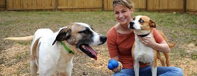 Кобель или сука: как выбрать пол собаки?