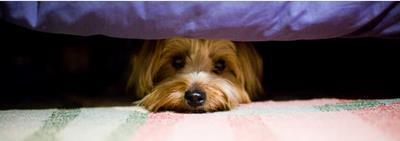 Что делать, если собака боится громких звуков