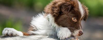 Как кормить щенка в возрасте 3 месяцев?