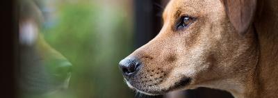 Что делать, если собака воет в отсутствие хозяев?