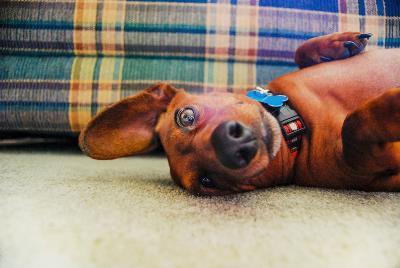 Как научить собаку команде «ползи»?