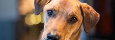 Что делать, если собака проглотила инородное тело