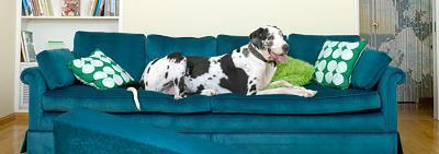 Как отучить собаку спать на кровати?