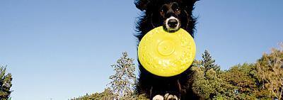 Как правильно выбирать игрушки для собаки?