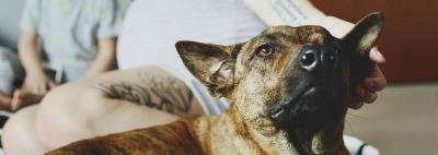 Основная гармоническая сетка как инструмент селекционного прогресса при совершенствовании экстерьера собак