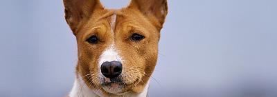 Отравление у собак: продукты, опасные для вашего питомца