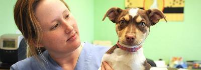 Здоровье собаки: регулярные осмотры у ветеринарного врача