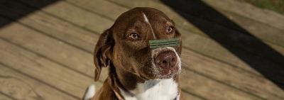 У собаки аллергия на белок. Чем её можно кормить?