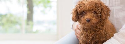 Как уговорить родителей купить собаку?