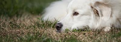 Когда начинается первая течка у собак?