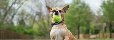 Какие команды должна знать собака?
