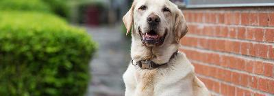 Как правильно подобрать ошейник и поводок для собаки?