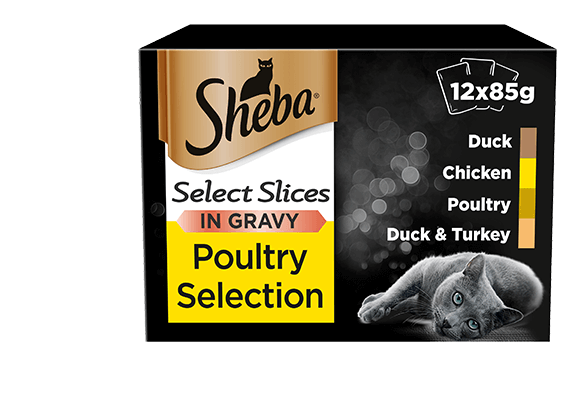 Poultry Collection Slices in gravy for cats