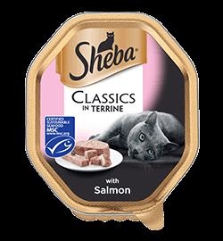 Classics in Terrine with Salmon