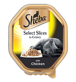 with Chicken Slices in gravy for cats