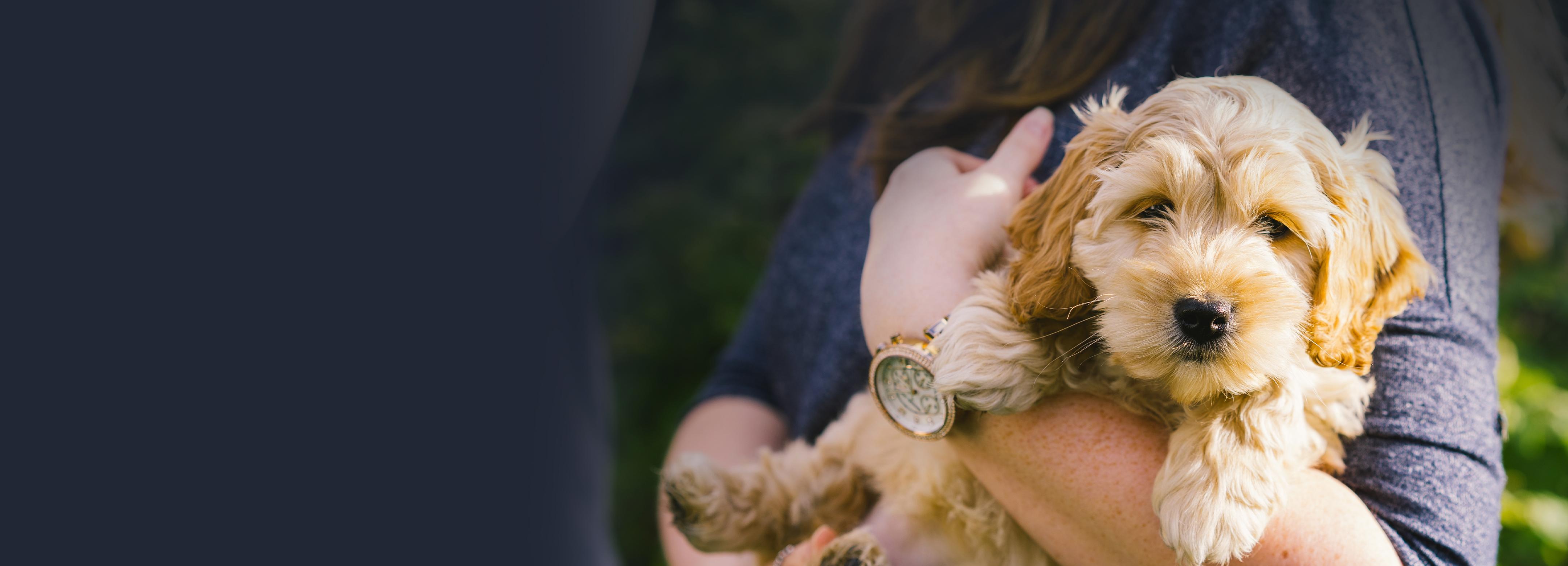 Waggel Pet Insurance
