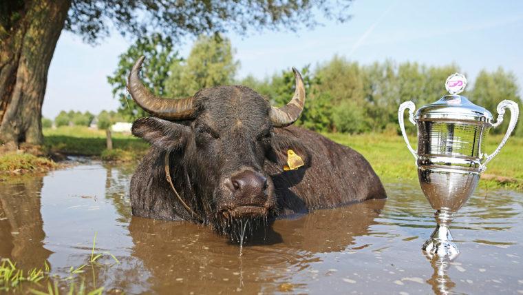 JVM_2043S-buffel-met-trofe