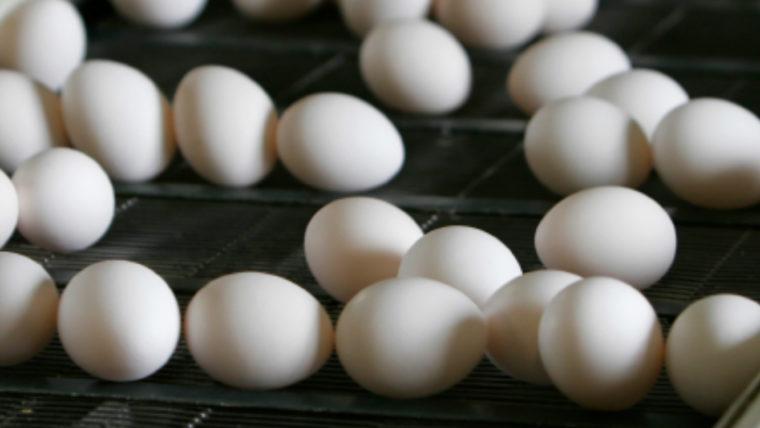 header-eieren