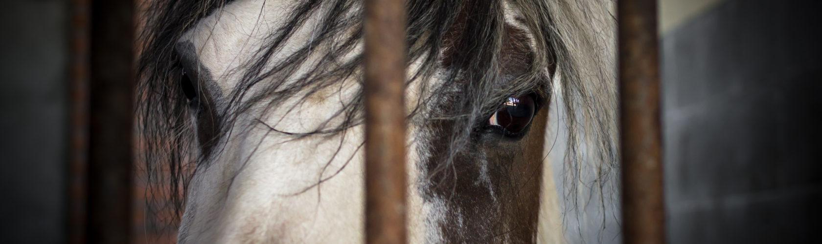 header-paarden