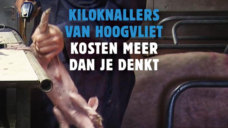WD_Kiloknaller_Hoogvliet_FacebookAd_1200x900-760×428
