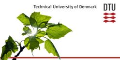 Director of the Danish Hydrocarbon Research and Technology Centre - DTU