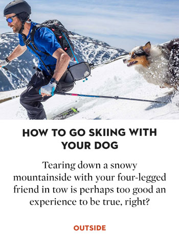 How to Go Skiing with Your Dog