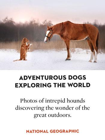 Adventurous dogs exploring the world