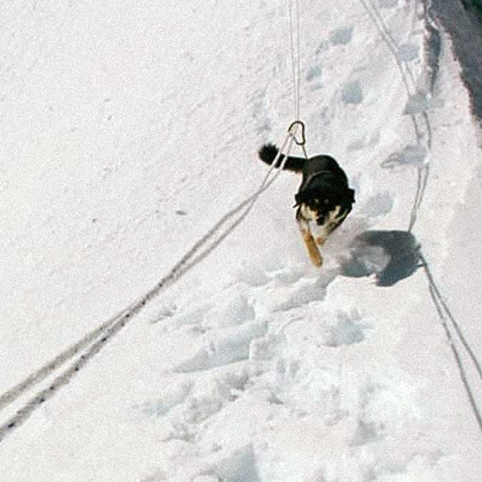First Canine Ascent of a 7,000 Metre Himalayan Peak