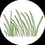 Permanent Grass