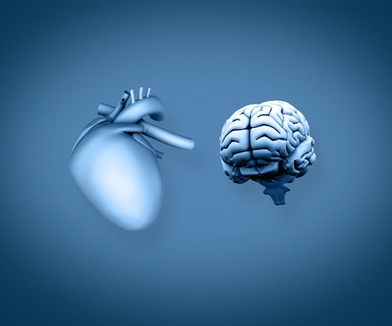 """Heart and brain"" stock image"