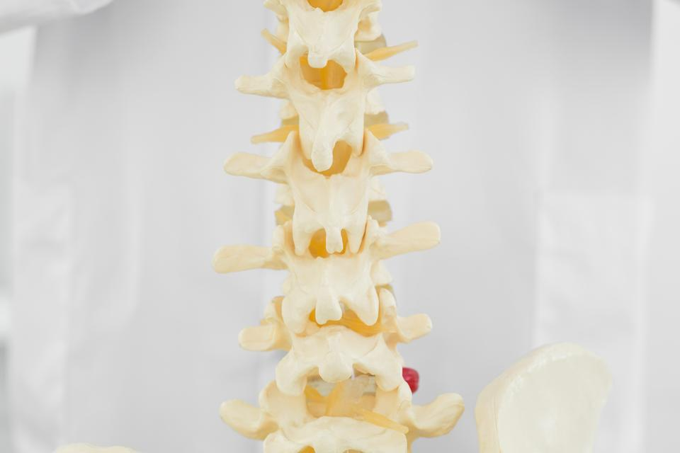 """Spine isolated over white background"" stock image"