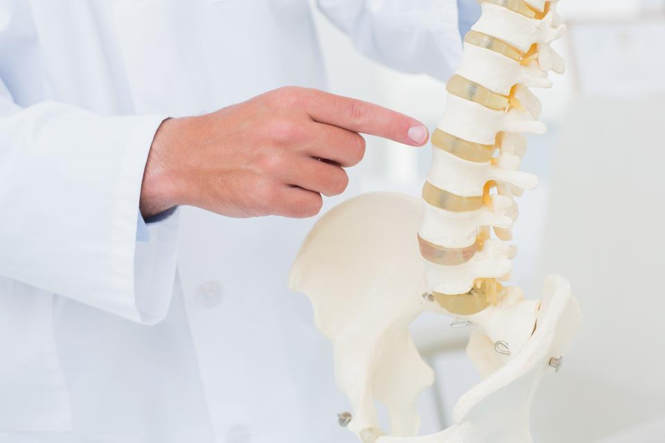 """Doctor pointing at anatomical spine"" stock image"