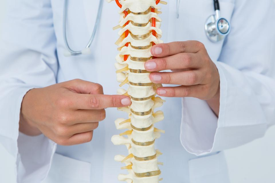 """""""Doctor pointing an anatomical spine"""" stock image"""
