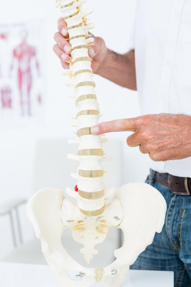 """Doctor showing anatomical spine"" stock image"
