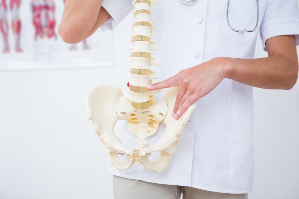 """""""Doctor showing anatomical spine"""" stock image"""