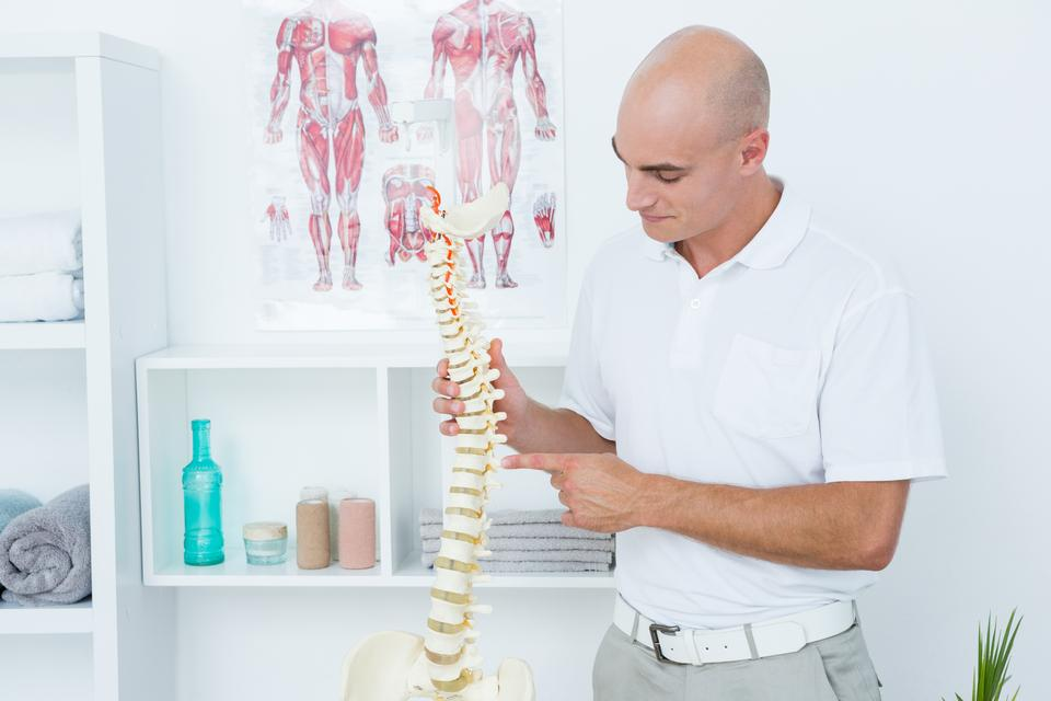 """""""Doctor holding an anatomical spine"""" stock image"""