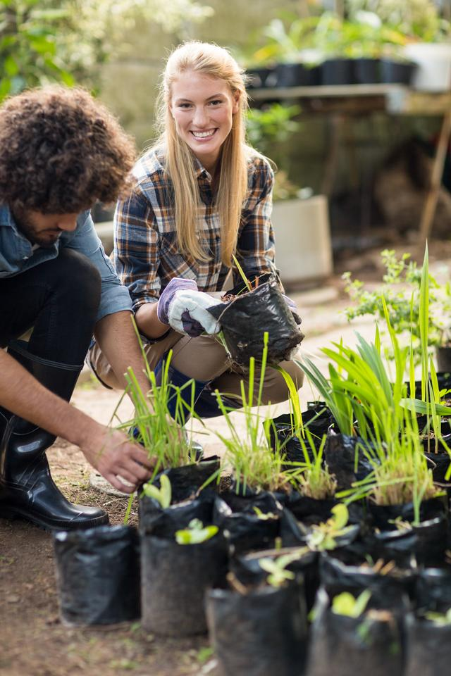 """""""Gardeners inspecting potted plants"""" stock image"""