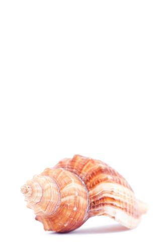 One side of a shellfish
