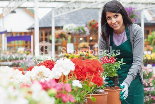 Woman planting a flower in a flower pot
